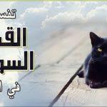 تفسير ظهور القطط السوداء فى الحلم او المنام تعرف عليها   شبكة عرب مصر