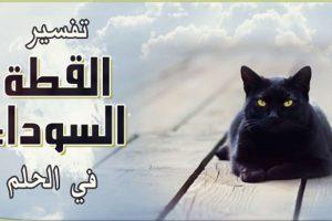 تفسير ظهور القطط السوداء فى الحلم او المنام تعرف عليها | شبكة عرب مصر